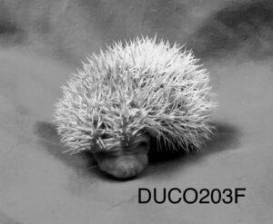 Terrapinhedgehogs Three