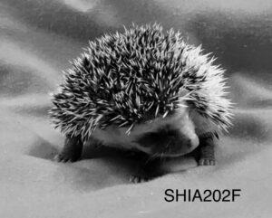 Terrapinhedgehogs Six