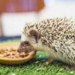 Terrapinhedgehogs food mix $10/bag