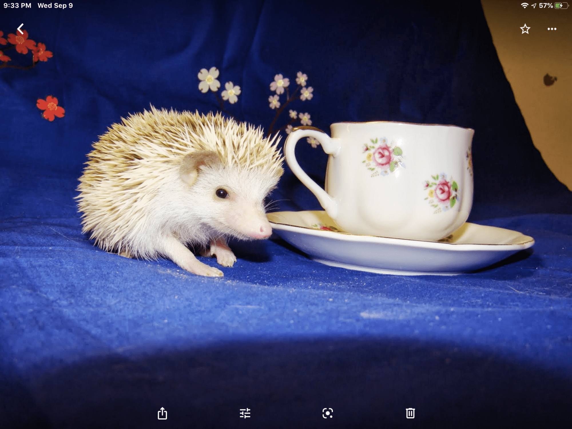 Read more about the article Welcome to Terrapin Hedgehogs